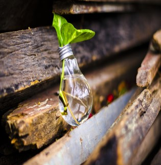 Image of plant growing in recycled light bulb